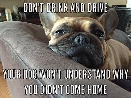 French Bulldog Meme - eastern canada french bulldog rescue home facebook