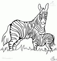 inspiring zebra coloring gallery kids ide 2963 unknown
