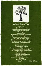 best 25 tree poem ideas on poems about trees another