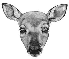 deer face drawing best images collections hd for gadget windows