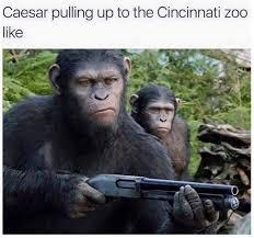 Gorilla Memes - must see harambe the gorilla memes bossip