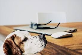 test ingresso veterinaria test veterinaria 2017 come fare scadenza cosa serve e info