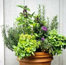 Herb Garden Pot Ideas 35 Herb Container Gardens Pots Planters Saturday Inspiration
