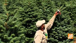 where fresh cut christmas trees come from u2013 the home depot youtube