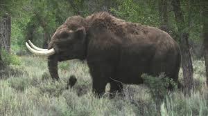 female mastodon fabulous bbc documentary series ice age