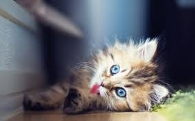 46 top selection of cute cat pics