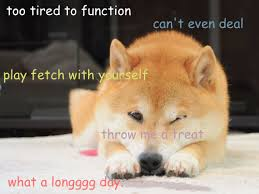 Create Your Own Doge Meme - memes wow amanda esteves