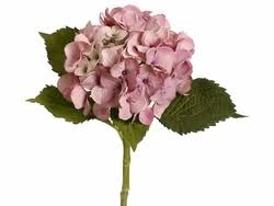 silk hydrangea artificial silk hydrangea stems set of 12 shown in pink