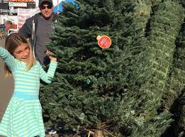 where to find a christmas tree in los angeles
