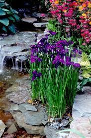 water garden picmia