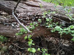 free images landscape tree nature leaf flower trunk old