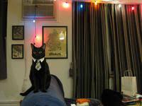 Business Cat Memes - business cat know your meme