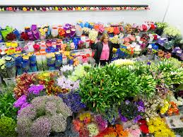 wholesale roses jet fresh flower distributors wholesale flowers miami wholesale