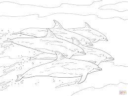 bottlenose dolphins coloring page free printable coloring