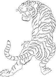 gallery tiger outlines drawing art gallery