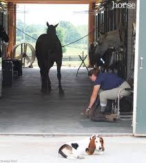 dog barn boarding barn confidential