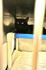 12 best cat condos gallery images on pinterest cat condo condos