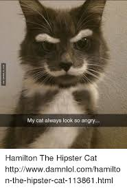 Hipster Cat Meme - my cat always look so angry hamilton the hipster cat