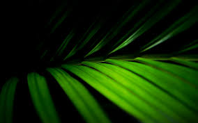 palm fronds for palm sunday palm branches background