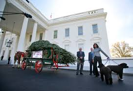 white house christmas tree arrives from pennsylvania wtop