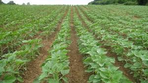 chambre d agriculture de l isere pollution atmosphérique lutte contre l ambroisie en milieu agricole