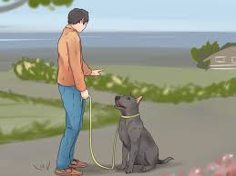 how to teach your dog to walk on a leash 12 steps with pictures