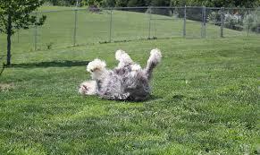 Canine Creature Comforts Creature Comfort Inn Home The Shenandoah Valley U0027s Award