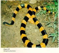 Serum Ular never give up serum ular untuk kekebalan penyakit