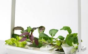 ikea brings hydroponic gardening to home kitchens the kansas