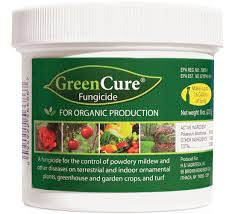 Plants Diseases And Treatment - green cure fungicide powdery mildew treatment planet natural