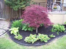 Ornamental Maple Tree Weeping Japanese Maple Garden Search Low Maintenance