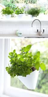shelves best 25 indoor window garden ideas on pinterest indoor