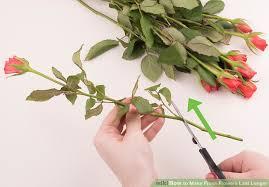 stem flowers 4 ways to make fresh flowers last longer wikihow