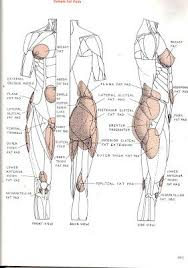 Female Anatomy Reference 21 Best Female Drawing References Images On Pinterest Human