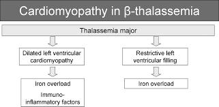 β thalassemia cardiomyopathy circulation heart failure