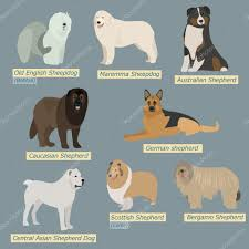 Types Of Dogs Simple Silhouettes Of Dogs Types Of Sheepdogs In Flat Design