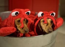 Weiner Dog Halloween Costumes 24 Dog Costumes Images Animals Pet Costumes