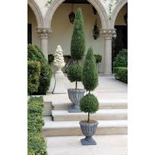 Real Topiary Trees For Sale - boxwood plants trees u0026 topiary you u0027ll love wayfair