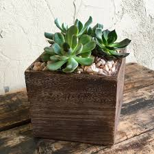 succulents in rustic wood cube u2013 urban jungle