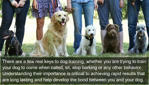 dog training tips how to teach a dog basic obedience album on
