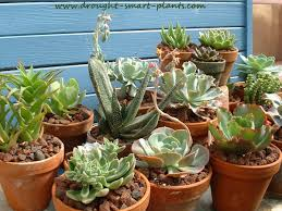 plants at home house plant succulent add succulents to your house plant collection