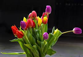 imagenes flores bellisimas 26 bellisimas flores hd para facebook whatsapp imágenesflores com