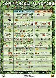 vegetable garden companion planting chart best idea garden