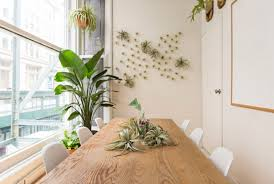 how to transform your workspace with plants