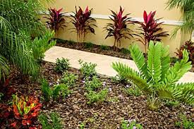 florida friendly landscaping florida plants florida gardening