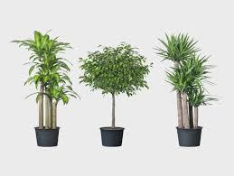 best plant for desk best desk plant new office design cool office plants cool office