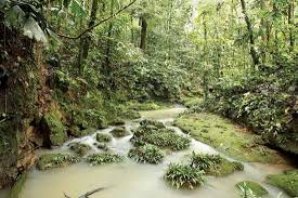 Dominant Plants Of The Tropical Rainforest - amazon rainforest plants animals climate u0026 deforestation