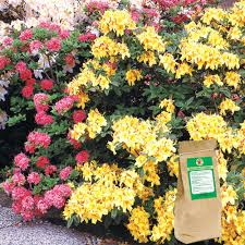 Fertilizer For Flowering Shrubs - gardens alive trees and shrubs