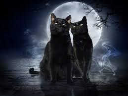 cat moon cat two black cats white hd wallpapers hd 16 9 high