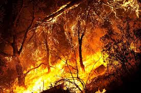 California Wildfire Rocky Fire by Clear Lake Wildfire Spreads To 71 Square Miles As Other Blazes